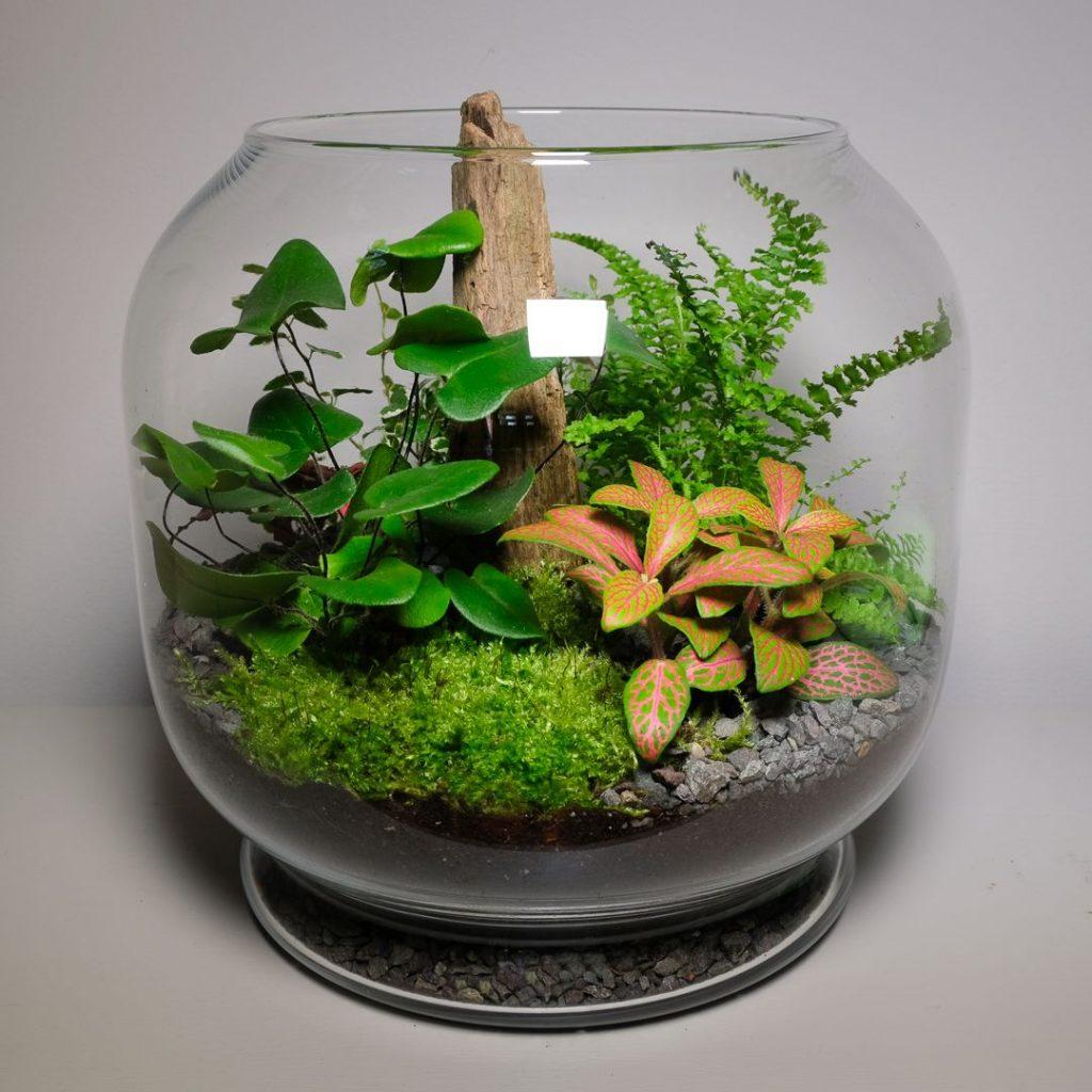 növény terrárium