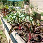 5 szempont, amelyet figyelembe kell venni egy zöldségeskert tervezésénél